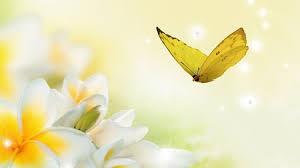 frangipani erfly yellow