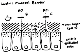 gastric mucosal barrier helicobacter