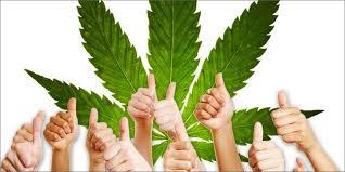 Image result for benefits of marijuana