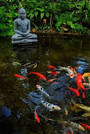 koi pond lighting ideas. Best 25 Koi Ponds Ideas On Pinterest Fish Pond Fountains And Diy Lighting