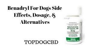 Benadryl For Dogs Side Effects Benadryl Alternatives Top