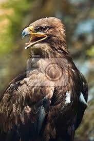 Tisk Plakátuobrazufototapety Eagle Print Pixeu