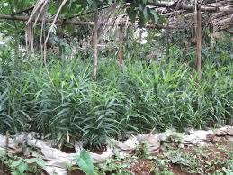 kisah petani sukses di indonesia