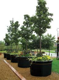 Illustration of Tips of Selecting Tree Planter Box