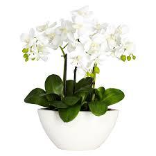 white flower vases  gardens and landscapings decoration