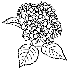 アジサイ紫陽花白黒夏の花無料イラスト素材
