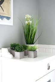 Pflanzen Fur Badezimmer Coffeesummitorg