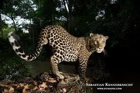 Bildresultat för congo wildlife