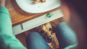 Foods Dogs Should Not Eat Chart Can My Dog Eat This A List Of Human Foods Dogs Can And Can