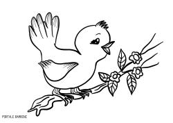 Disegni Di Uccelli Da Stampare E Colorare Gratis Portale Bambini