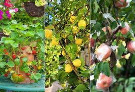 fruits and berries for containers