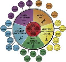 Circular Organizational Chart Image Result For Circular Org Chart Org Chart Forensic