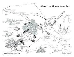Adult Coloring Pages Animals Mandala Coloring Cat Mandala Coloring
