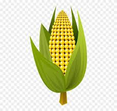 ear of corn clipart. Simple Corn Ear Of Corn Clipart 14  Clip Art For A