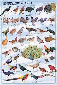 Laminated Gamebirds Land Fowl Identification Poster Chart