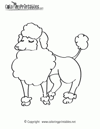 poodle animal coloring pages