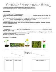 Venn Diagram Of Vascular And Nonvascular Plants Vascular And Nonvascular Plants Worksheets Teaching