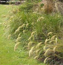 Small Picture Planting with New Zealand Natives NZ Native Garden Plans and Design
