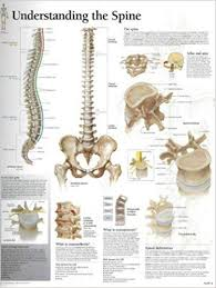Understanding The Spine Chart Laminated Wall Chart