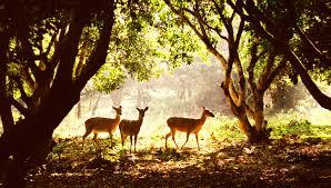 Kết quả hình ảnh cho Vườn Quốc gia Cúc Phương