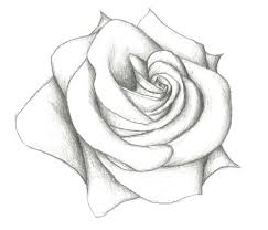 Small Picture Drawn Rose Pencil Roses Easy Drawing Of Artisanjpg Coloring Page