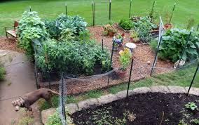 My Kitchen Garden My Kitchen Garden In July Counting My Chickenscounting My Chickens