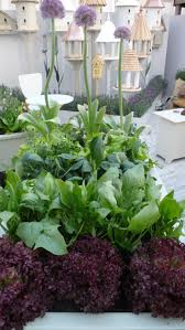 Our Kitchen Garden The Planting In Our Kitchen Garden Sparrow Finch At The
