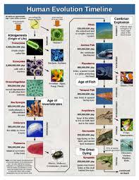 Human Evolution Timeline Chart Human Evolution Timeline