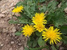 medicinal plants herb mamas image