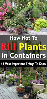 Caring For Potted PlantsContainer Garden Plans Flowers