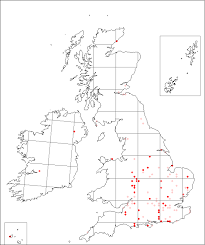 Isatis tinctoria | Online Atlas of the British and Irish Flora