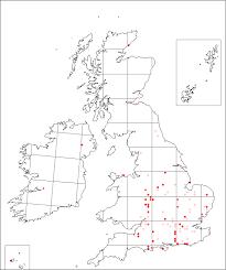 Isatis tinctoria | Online Atlas of the British and Irish Flora