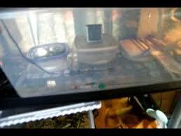 update on my bearded dragon eggy homemade incubator