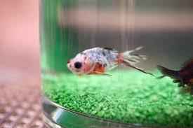 office fish. Fish Tank In Aquarium As An Office Decoration Idea