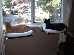 great diy cat perch hilary d i y window with cozy fleece bed hauspanther project wall outdoor tree