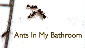 Ants In Bathroom Cool Inspiration