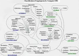 Cronquist System Of Plant Classification The Edible Plants