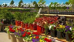 denver garden centers. O\u0027Toole\u0027s Color In Colorado Denver Garden Centers C