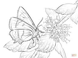 Small Picture Butterfly coloring pages Free Coloring Pages