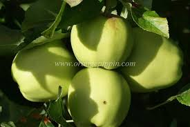 Green Fruit Tree Identification