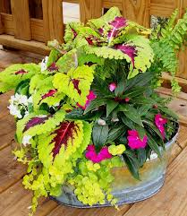 Small Picture Best 25 Container flowers ideas on Pinterest Container plants