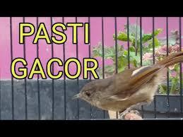 Download lagu burung flamboyan betina (5.9mb) dan streaming kumpulan lagu burung flamboyan betina (5.9mb) mp3 terbaru di metrolagu dan hasil diatas adalah hasil pencarian dari anda burung flamboyan betina mp3 dan menurut kami yang paling cocok adalah burung. 6 45 Mb Riview Burung Flamboyan Wergan Jawa Beli Dari Ombyokan Download Lagu Mp3 Gratis Mp3 Dragon