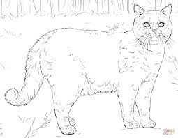 British Shorthair Cat Coloring Page Free Printable Coloring Pages