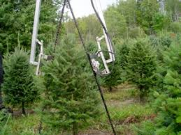 Growing and caring for Christmas trees involves a year-round commitment of  many years. It involves a whole lot more than just digging a hole and  planting a ...