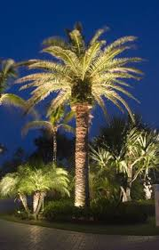 lighting outdoor trees. oh i love palm trees lighting outdoor