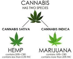 Sativa And Indica Chart Cbd Oil And Indica