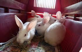 Resume Rabbit Reviews Moneystance Com 25 Best Ideas About Cool