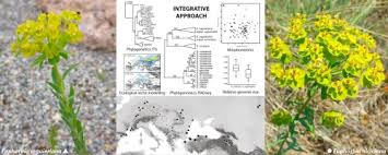 Integrating phylogenomics, phylogenetics, morphometrics, relative ...