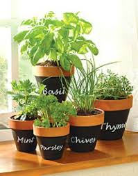 Small Picture Herb Garden Ideas Pots Only On Pinterest Diy Growing Herbs Indoors
