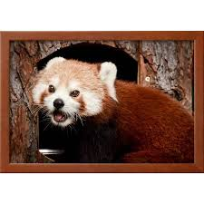 red panda framed print wall art by jure on red panda wall art with red panda framed print wall art by jure walmart